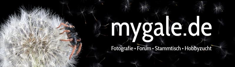 http://www.mygale.de/